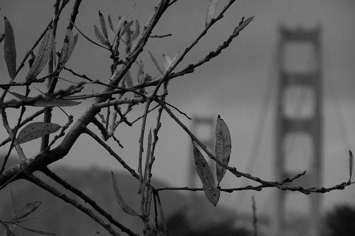 Bridge and Nature